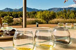 'Olive oil tasting