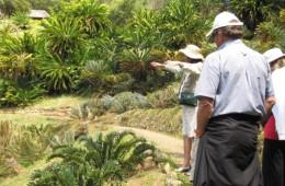 Cycads in Kirstenbosch